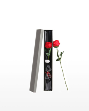A single red rose enclosed in an elegant gift box